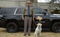 DPS canine team